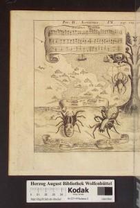 fig. 3 (Antidotum tarantulae)