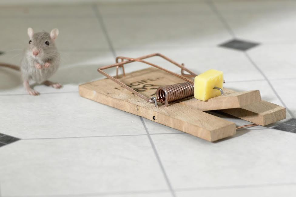 Come topi in trappola - Arabpress