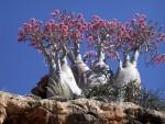 Socotra: l'isola della felicità