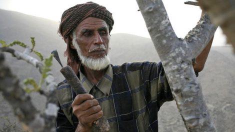 tribù yemen