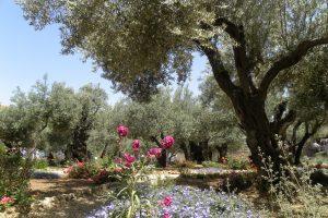 giardino ulivi getsemani