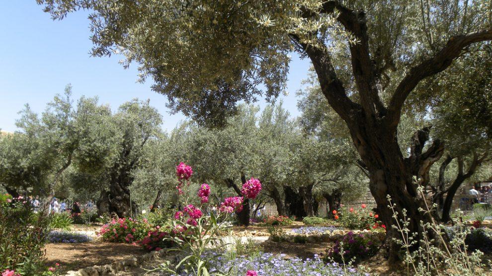 il giardino degli ulivi di deborah rohan arabpress
