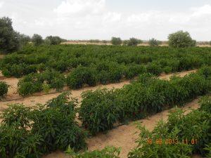 sito-di-attivita-agronomiche-tunisia