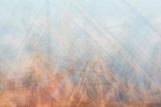 01. Veronica Gaido, Gli alberi di Mogador, da Mogador